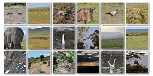 collage_kenia_600x300